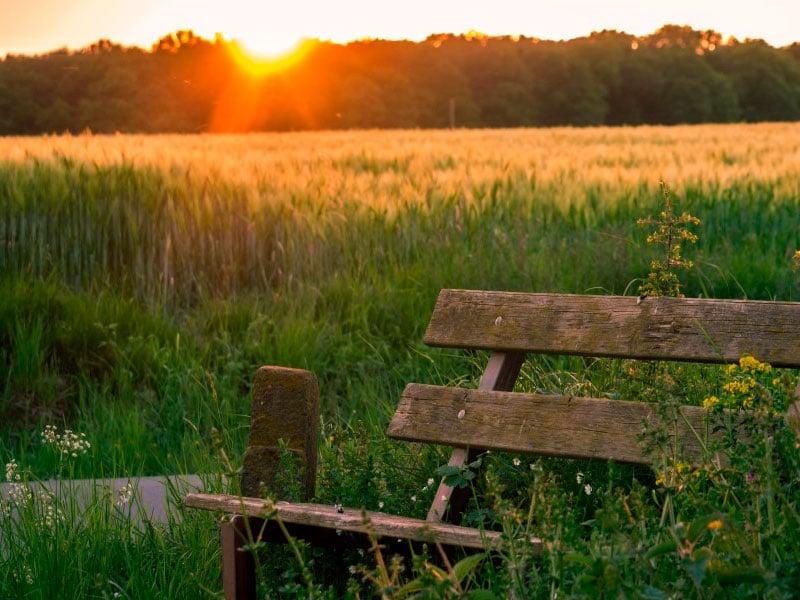 beneficios de disfrutar de la naturaleza